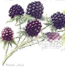 Blkberry